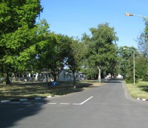 Bäume Landwehrvierte